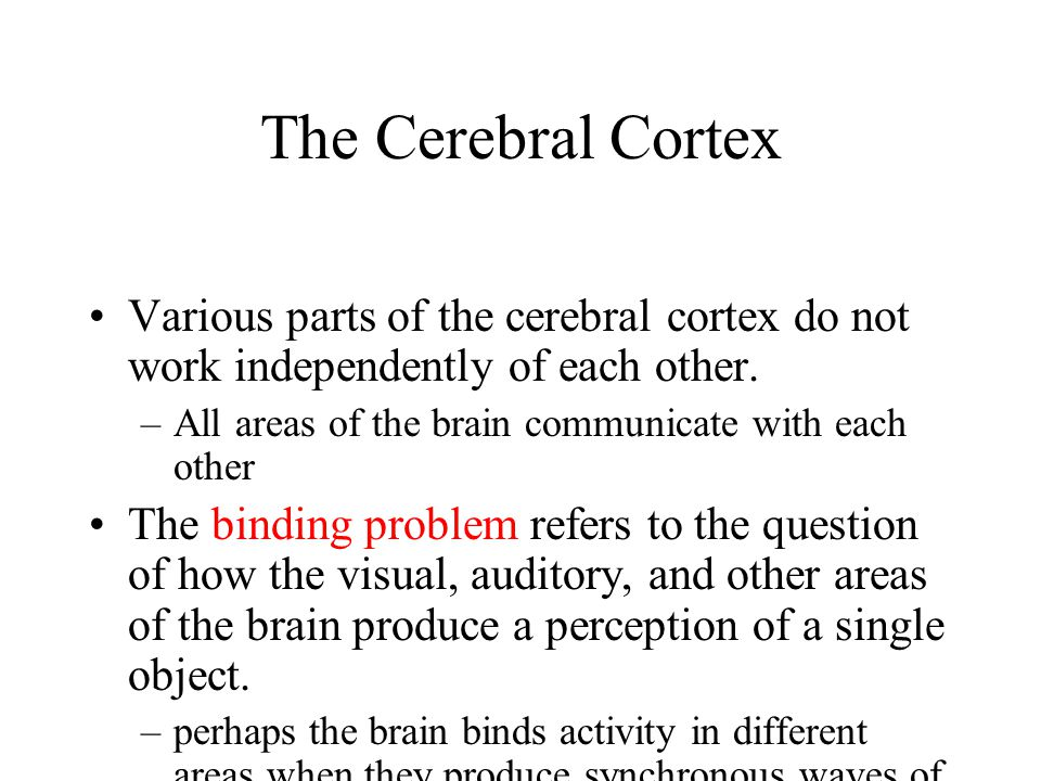 The Cerebral Cortex Various parts of the cerebral cortex do not work independently of each other. –All areas of the brain communicate with each other