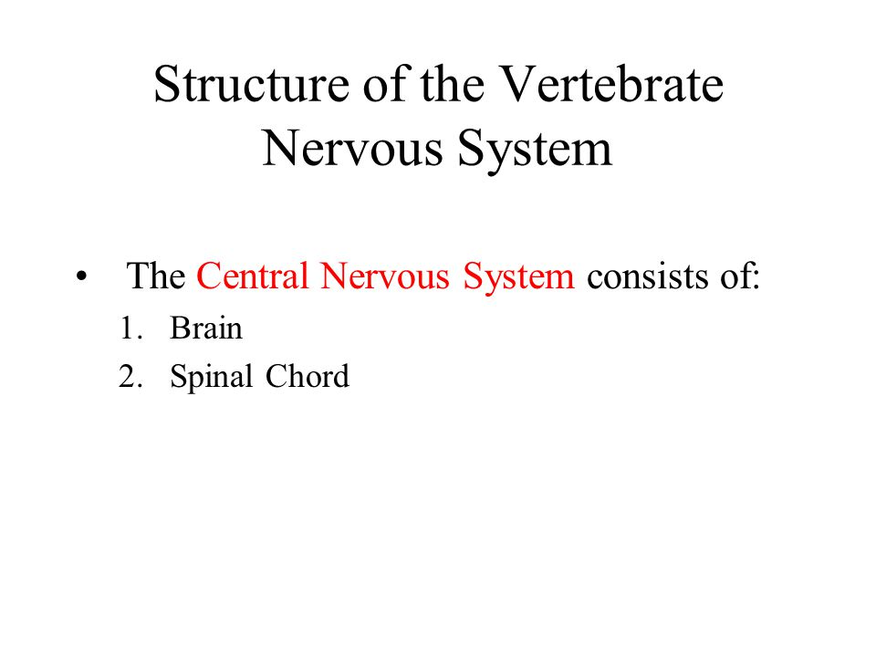 Structure of the Vertebrate Nervous System The Central Nervous System consists of: 1.Brain 2.Spinal Chord