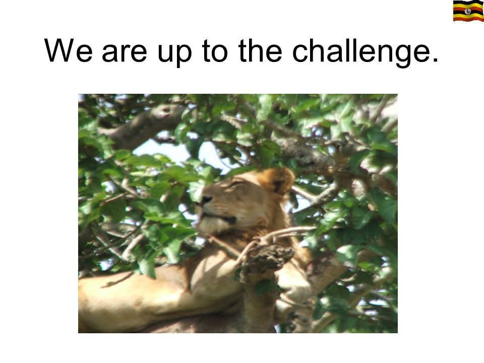 We are up to the challenge.