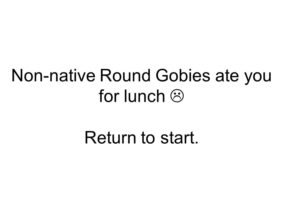 Non-native Round Gobies ate you for lunch  Return to start.
