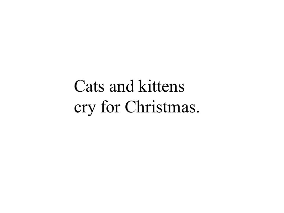 Cats and kittens cry for Christmas.