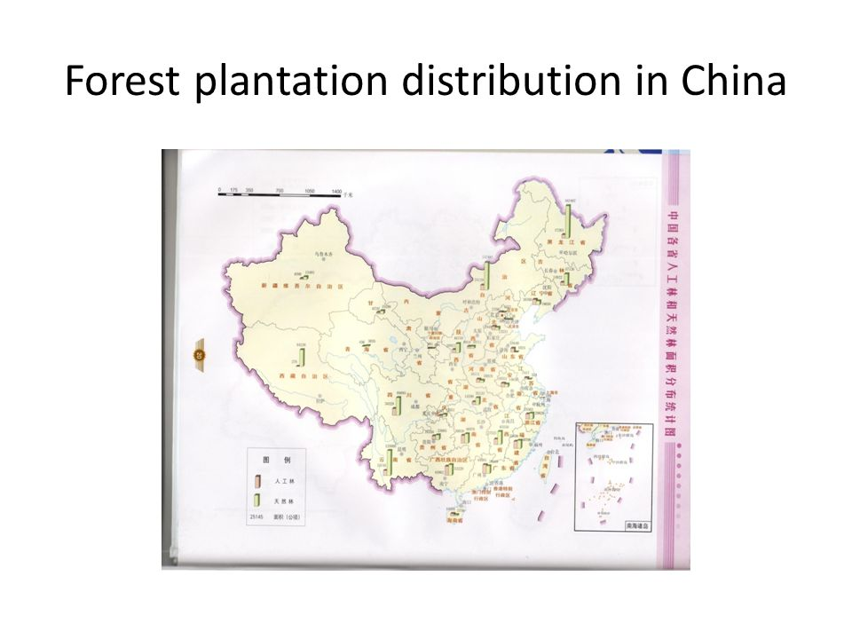 Forest plantation distribution in China