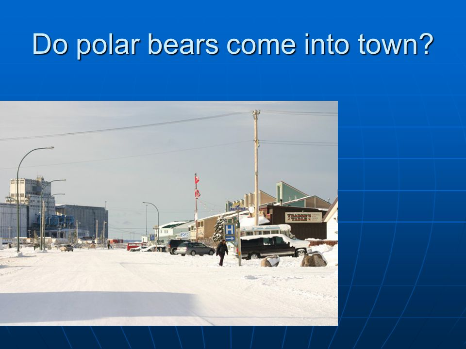 Do polar bears come into town