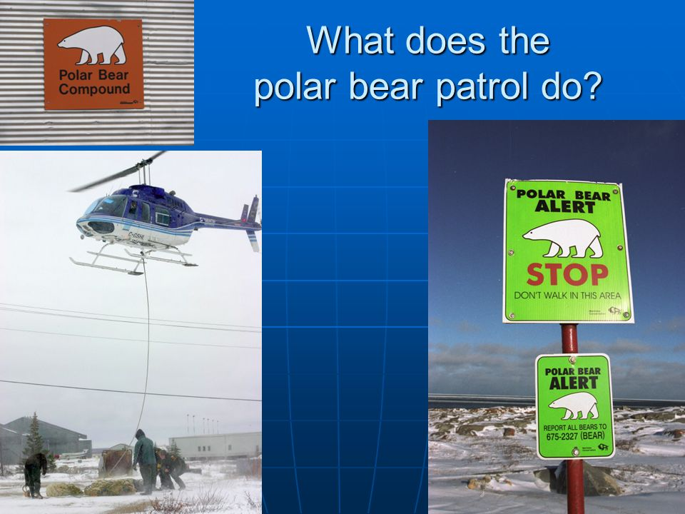 What does the polar bear patrol do