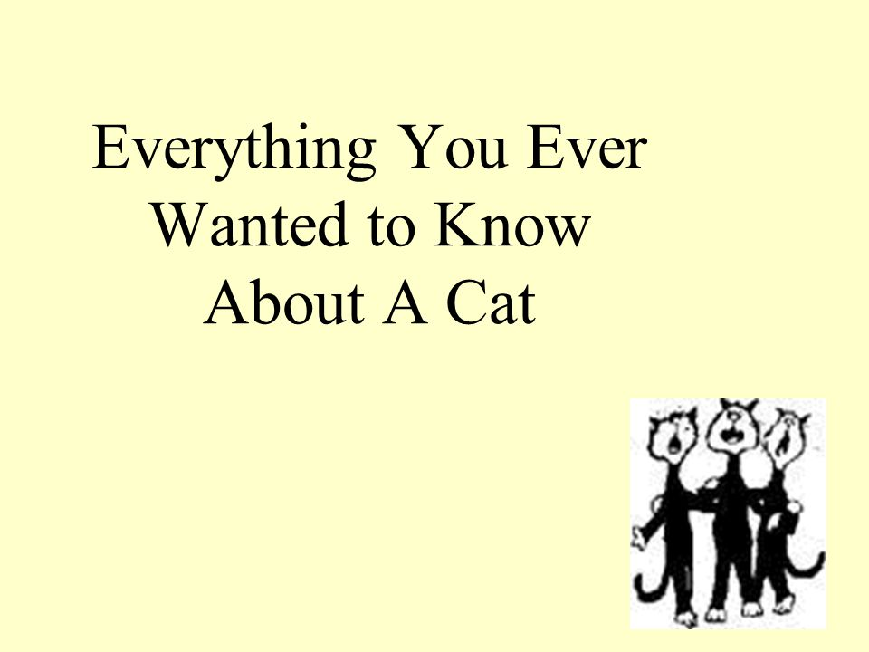 Everything You Ever Wanted to Know About A Cat