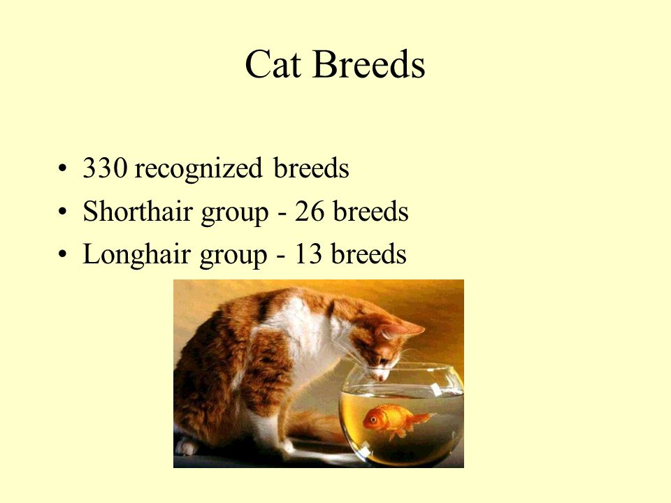 Cat Breeds 330 recognized breeds Shorthair group - 26 breeds Longhair group - 13 breeds