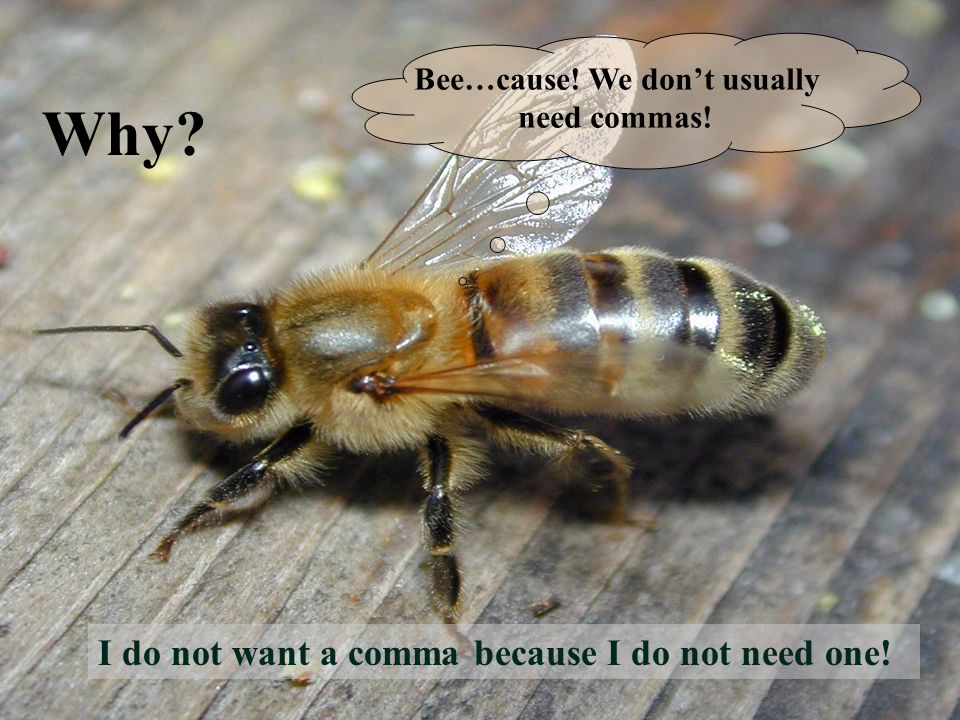 When you see a bee…(because), get your comma out of there!