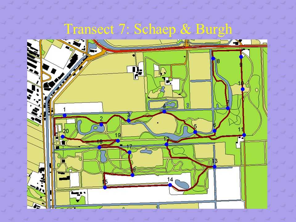 Transect 7: Schaep & Burgh