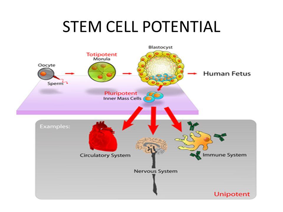 TF y NanoFactor: MEJORA LA ACTIVIDAD NK TF y NanoFactor: MEJORA LA ACTIVIDAD NK