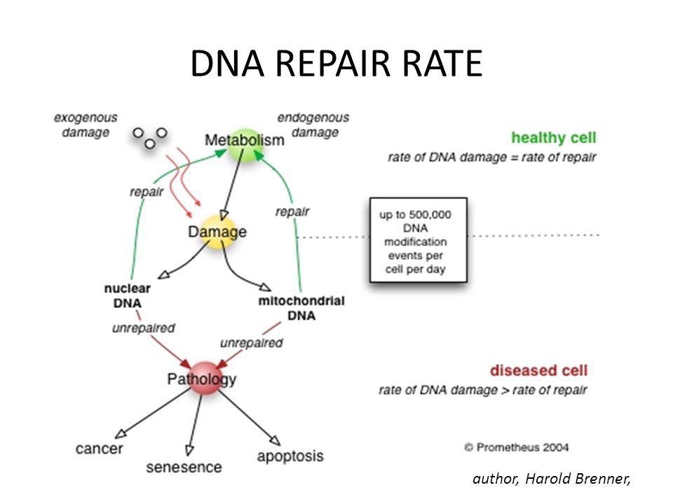 DNA REPAIR RATE author, Harold Brenner,