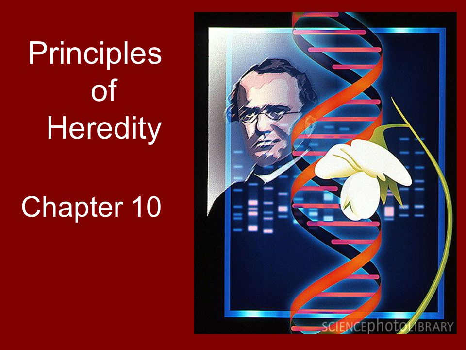 Principles of Heredity Chapter 10