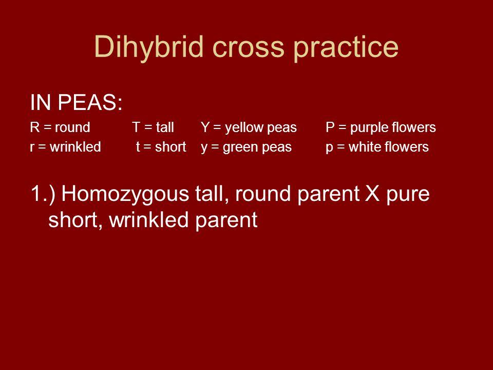 Dihybrid cross practice IN PEAS: R = round T = tall Y = yellow peasP = purple flowers r = wrinkled t = short y = green peasp = white flowers 1.) Homoz
