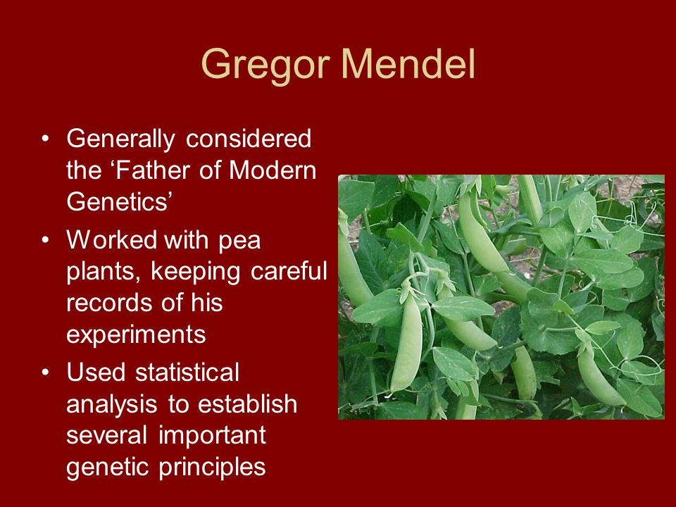 The Principle of Independent Assortment Another of Mendel's ideas Explains the results of these types of dihybrid crosses Each different trait is inherited independently from the other Now we know that this is due to meiosis – homologous chromosomes separate independently (again, when?)