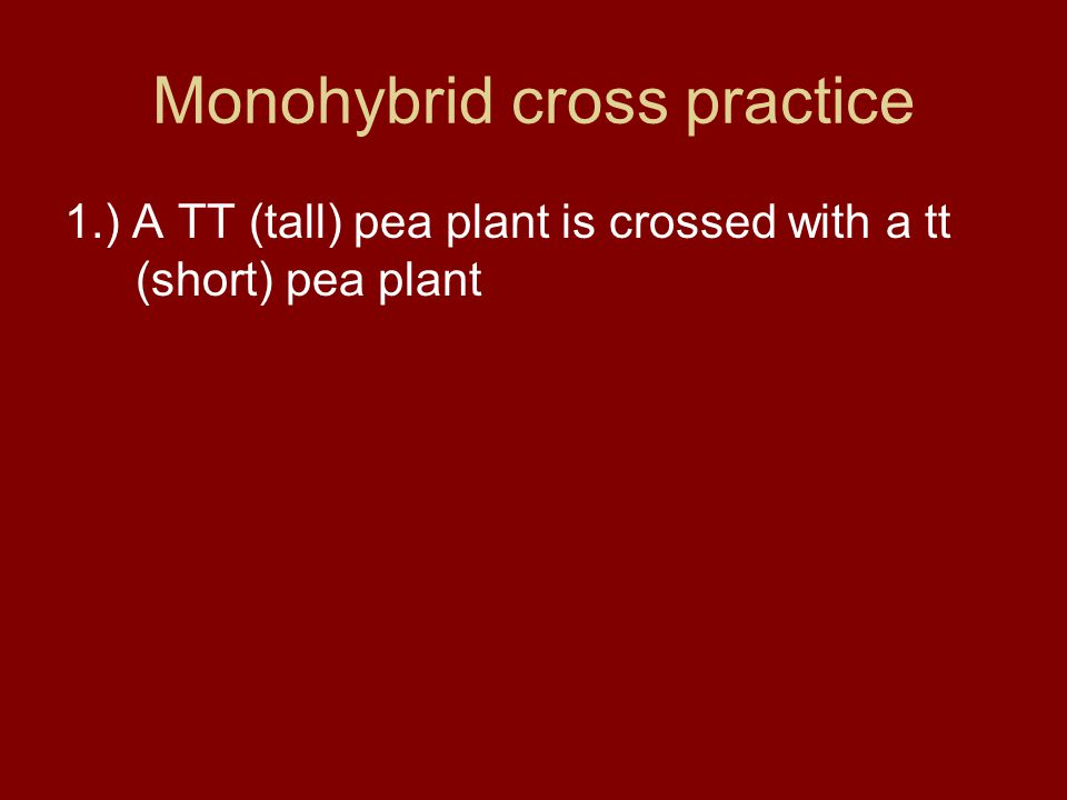 Monohybrid cross practice… 2.) A Tt pea plant is crossed with a Tt pea plant.