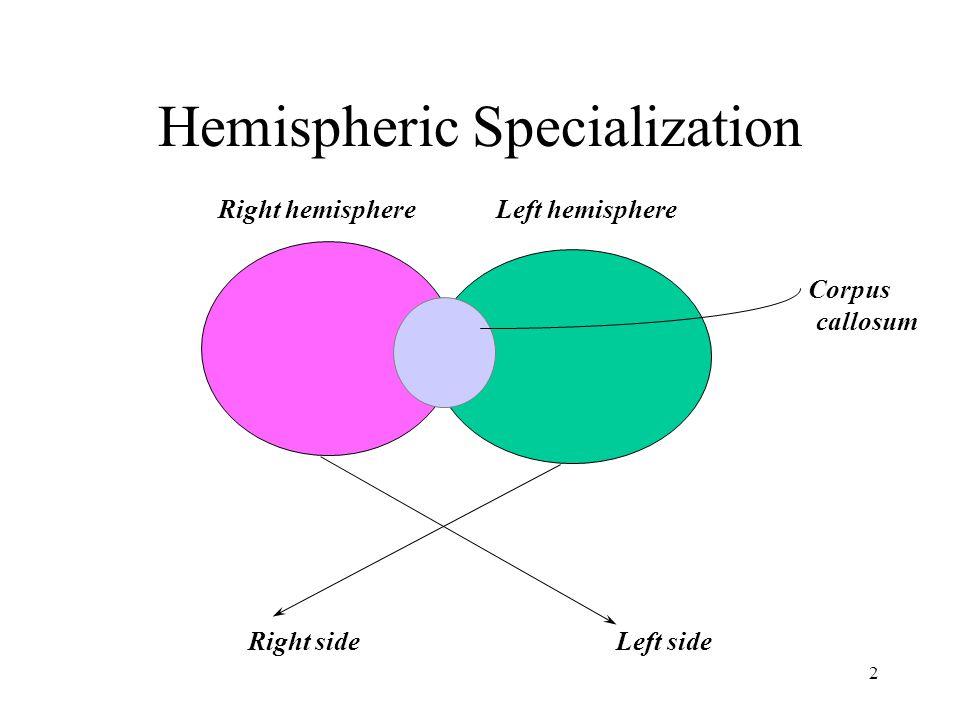 2 Hemispheric Specialization Right hemisphereLeft hemisphere Right sideLeft side Corpus callosum