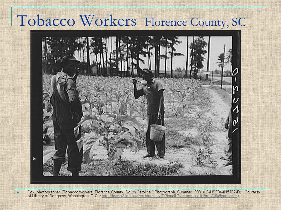 "Tobacco Workers Florence County, SC Cox, photographer. ""Tobacco workers. Florence County, South Carolina."" Photograph. Summer 1938. (LC-USF34-015762-D"