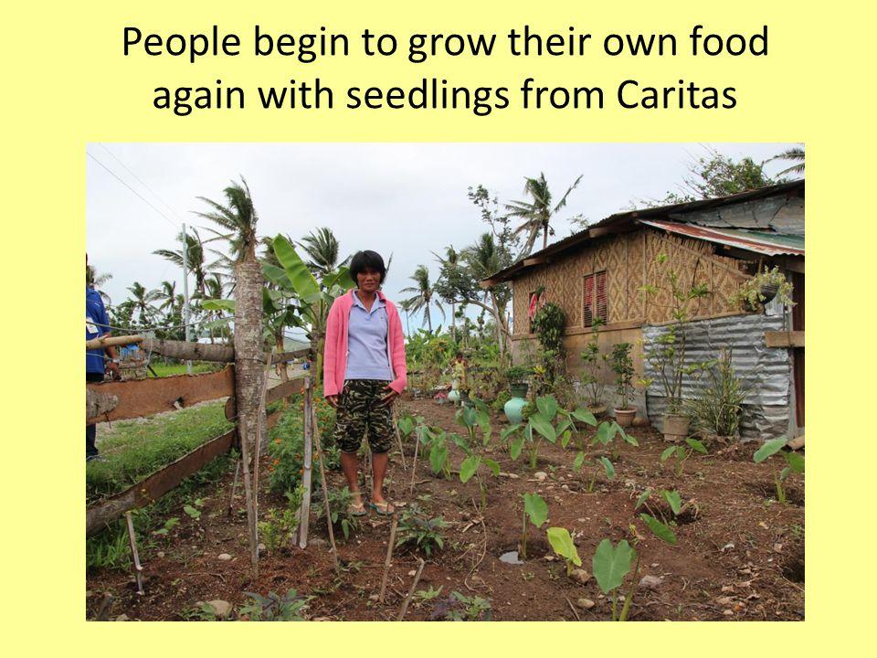 People begin to grow their own food again with seedlings from Caritas