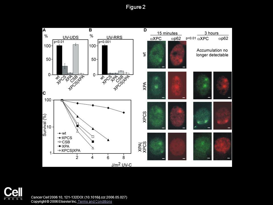 Figure 3 Cancer Cell 2006 10, 121-132DOI: (10.1016/j.ccr.2006.05.027) Copyright © 2006 Elsevier Inc.