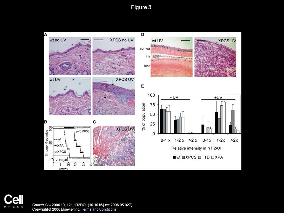 Figure 4 Cancer Cell 2006 10, 121-132DOI: (10.1016/j.ccr.2006.05.027) Copyright © 2006 Elsevier Inc.