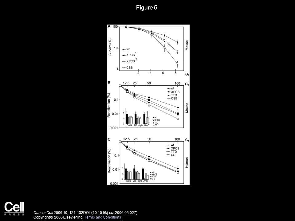 Figure 5 Cancer Cell 2006 10, 121-132DOI: (10.1016/j.ccr.2006.05.027) Copyright © 2006 Elsevier Inc.