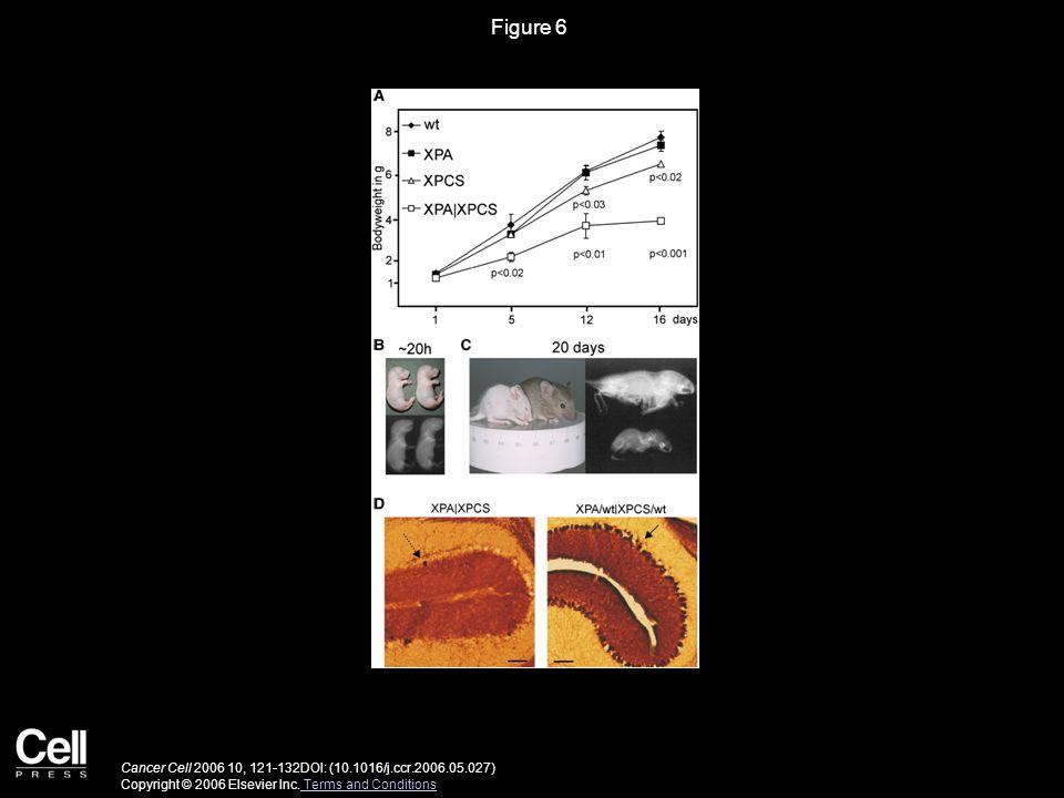 Figure 6 Cancer Cell 2006 10, 121-132DOI: (10.1016/j.ccr.2006.05.027) Copyright © 2006 Elsevier Inc.