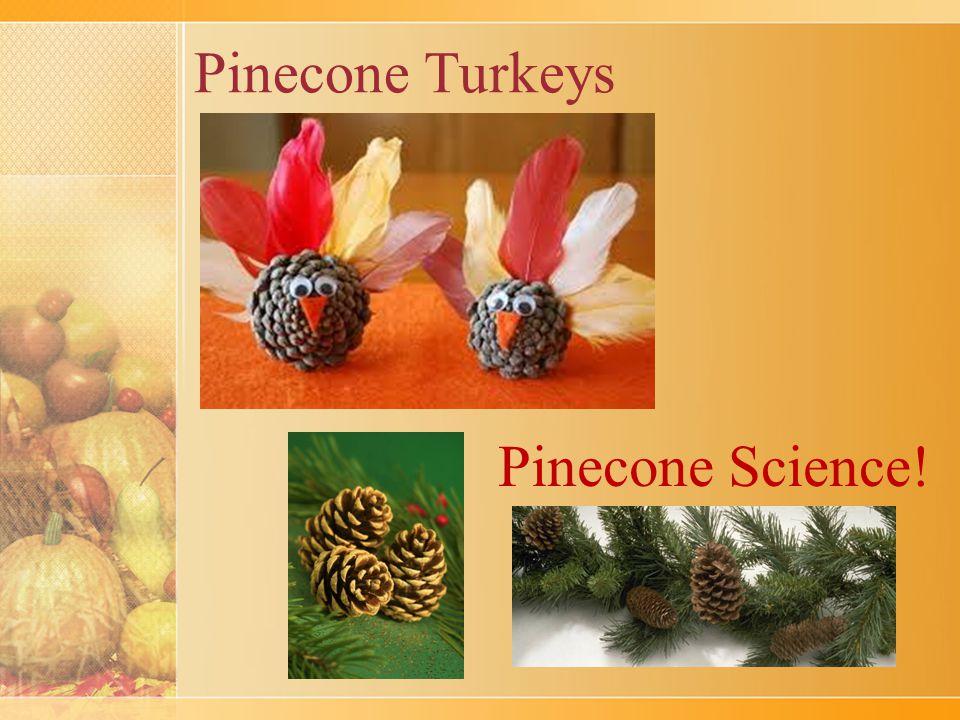 Pinecone Turkeys Pinecone Science!