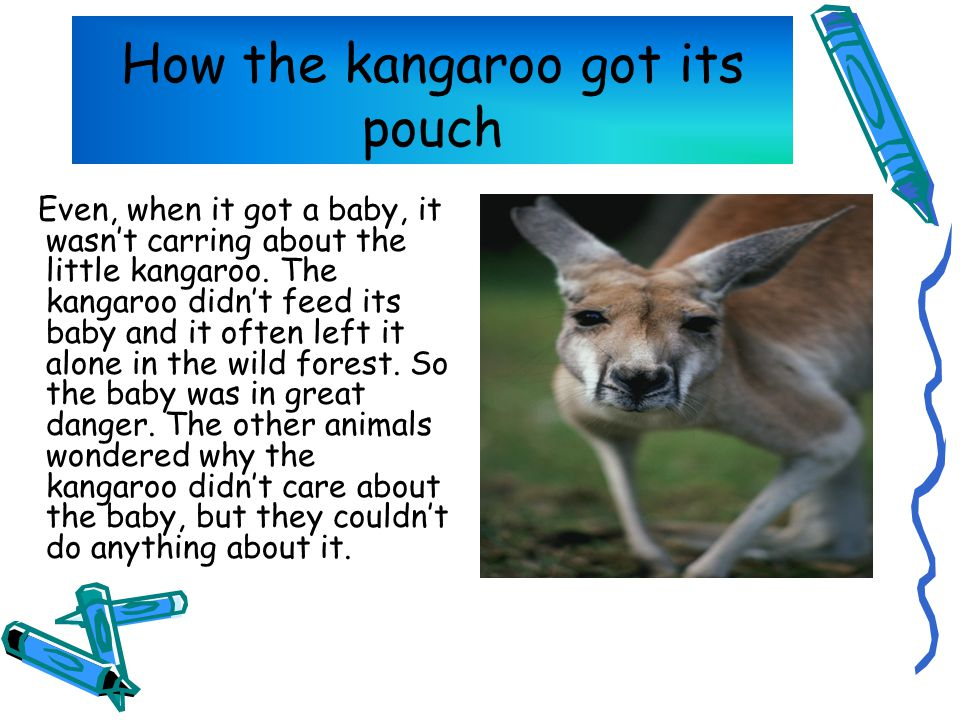 How the kangaroo got its pouch Even, when it got a baby, it wasn't carring about the little kangaroo.