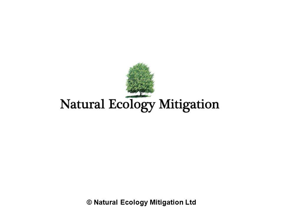 © Natural Ecology Mitigation Ltd