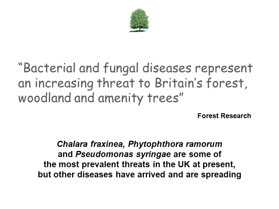 Bacterial and fungal diseases represent an increasing threat to Britain's forest, woodland and amenity trees Forest Research Chalara fraxinea, Phytophthora ramorum and Pseudomonas syringae are some of the most prevalent threats in the UK at present, but other diseases have arrived and are spreading