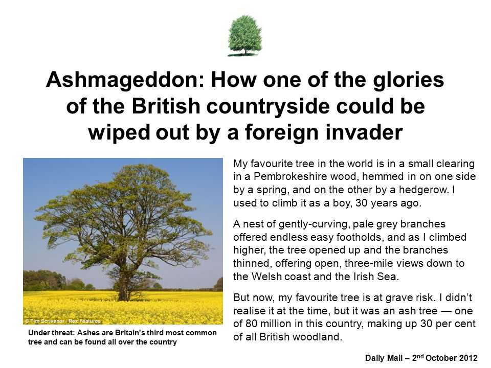 Ashmageddon: How one of the glories of the British countryside could be wiped out by a foreign invader My favourite tree in the world is in a small clearing in a Pembrokeshire wood, hemmed in on one side by a spring, and on the other by a hedgerow.