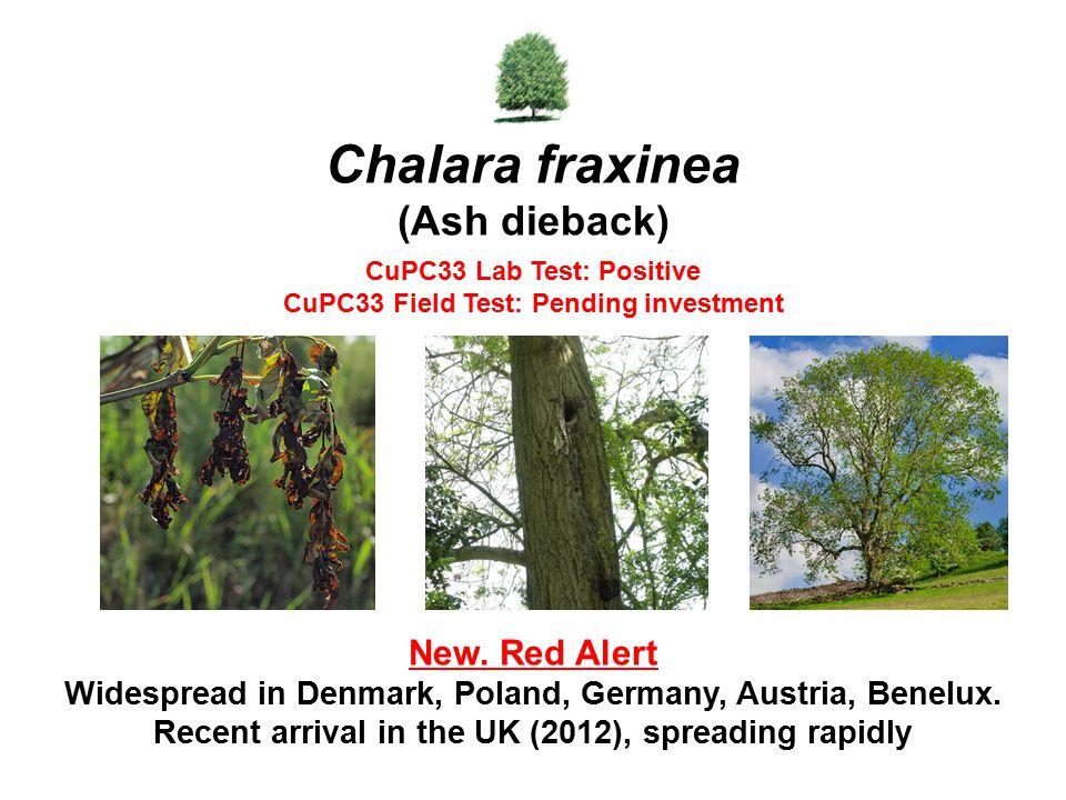 Chalara fraxinea (Ash dieback) New. Red Alert Widespread in Denmark, Poland, Germany, Austria, Benelux. Recent arrival in the UK (2012), spreading rap
