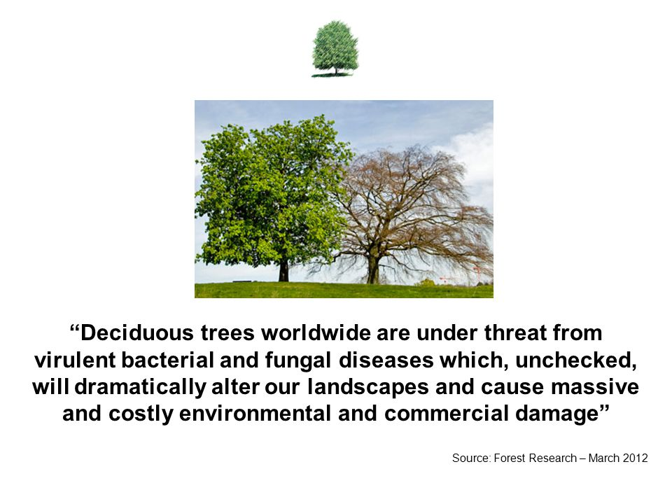Deciduous trees worldwide are under threat from virulent bacterial and fungal diseases which, unchecked, will dramatically alter our landscapes and cause massive and costly environmental and commercial damage Source: Forest Research – March 2012