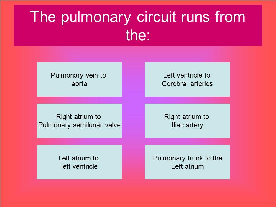 The pulmonary circuit runs from the: Pulmonary vein to aorta Right atrium to Pulmonary semilunar valve Left atrium to left ventricle Pulmonary trunk t
