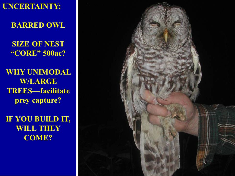 UNCERTAINTY: BARRED OWL SIZE OF NEST CORE 500ac.