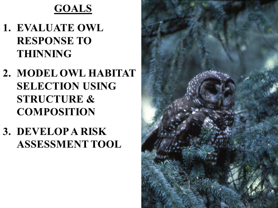 GOALS 1.EVALUATE OWL RESPONSE TO THINNING 2.MODEL OWL HABITAT SELECTION USING STRUCTURE & COMPOSITION 3.DEVELOP A RISK ASSESSMENT TOOL