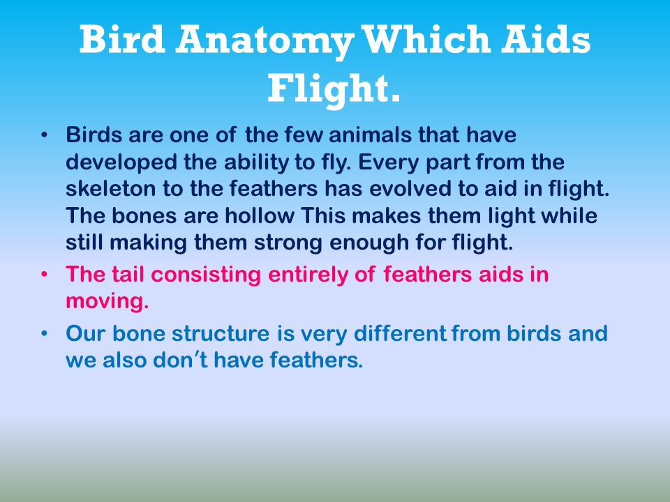 Bird Anatomy Which Aids Flight.
