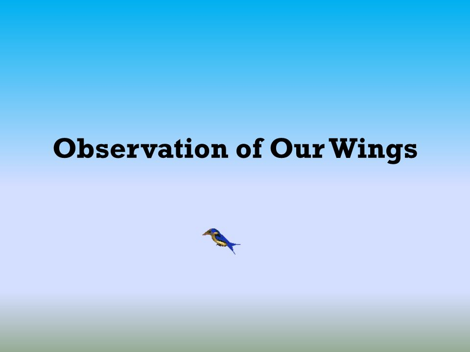 Observation of Our Wings