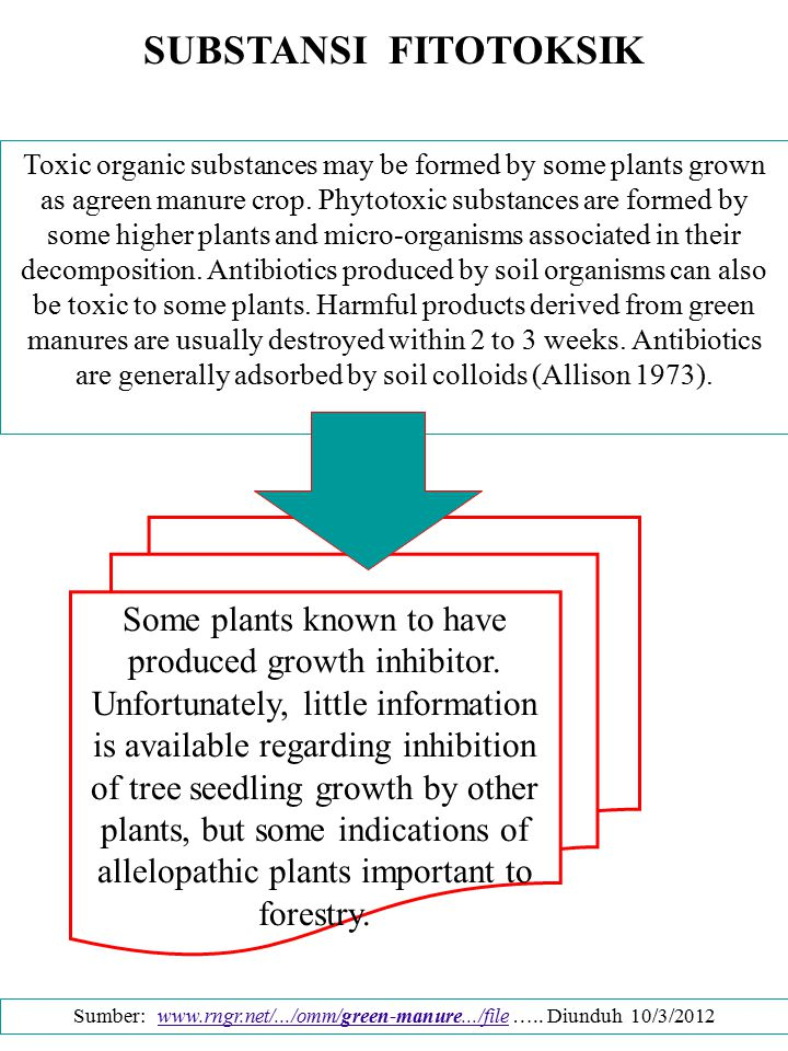 SUBSTANSI FITOTOKSIK Toxic organic substances may be formed by some plants grown as agreen manure crop. Phytotoxic substances are formed by some highe