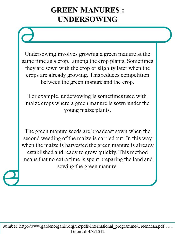 GREEN MANURES : UNDERSOWING Undersowing involves growing a green manure at the same time as a crop, among the crop plants. Sometimes they are sown wit