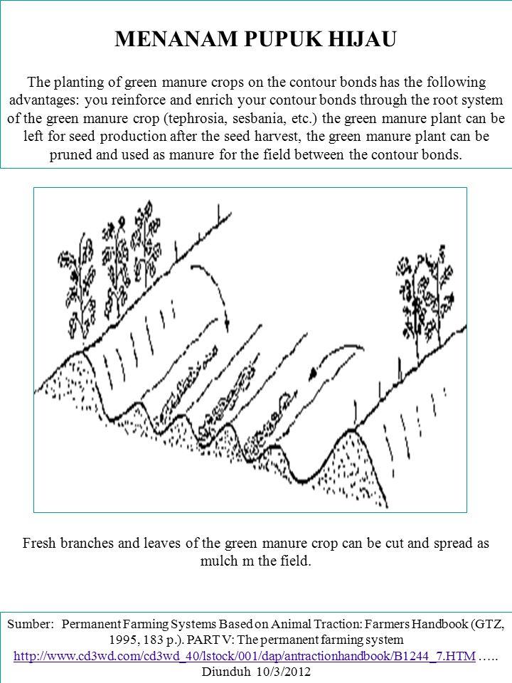 MENANAM PUPUK HIJAU The planting of green manure crops on the contour bonds has the following advantages: you reinforce and enrich your contour bonds