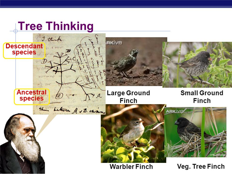 AP Biology Darwin was amazed to find out: All 14 species of birds were finches… Finch?Sparrow? Woodpecker? Warbler? But Darwin found… a lot of finches