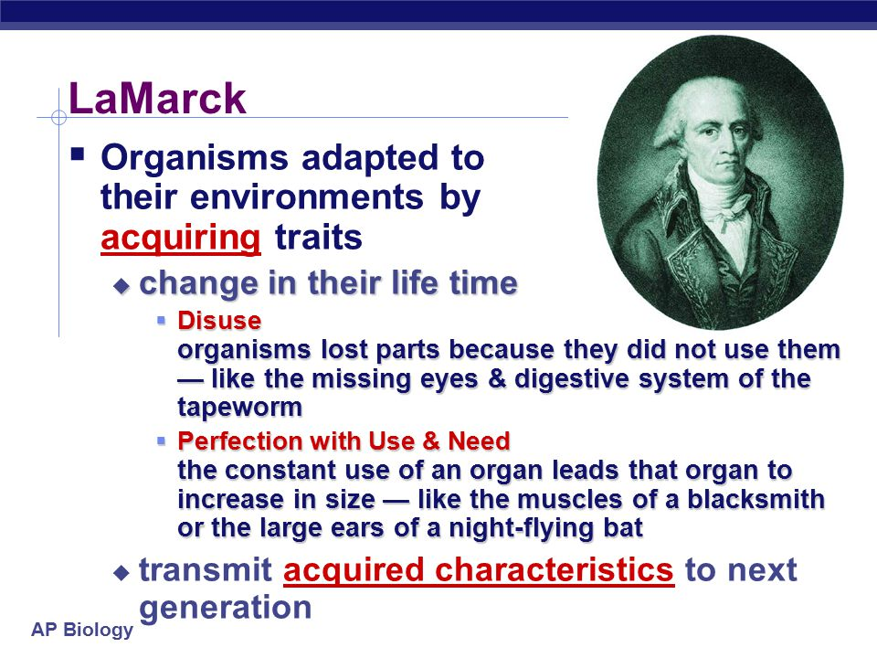 AP Biology LaMarck  Organisms adapted to their environments by acquiring traits  change in their life time  Disuse organisms lost parts because they did not use them — like the missing eyes & digestive system of the tapeworm  Perfection with Use & Need the constant use of an organ leads that organ to increase in size — like the muscles of a blacksmith or the large ears of a night-flying bat  transmit acquired characteristics to next generation