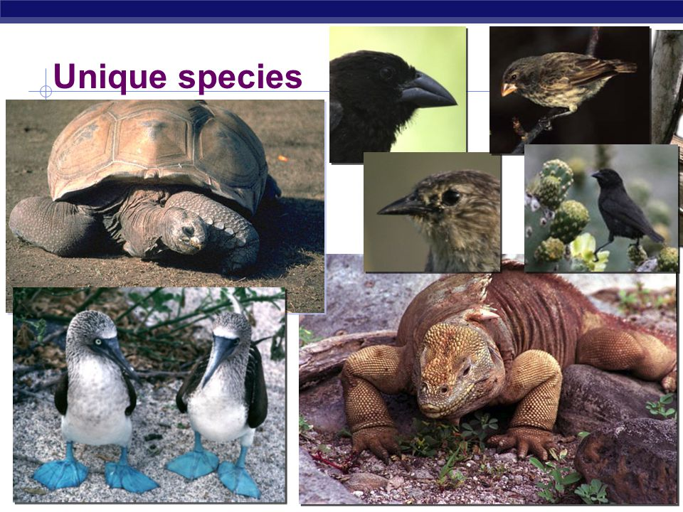 AP Biology Unique species