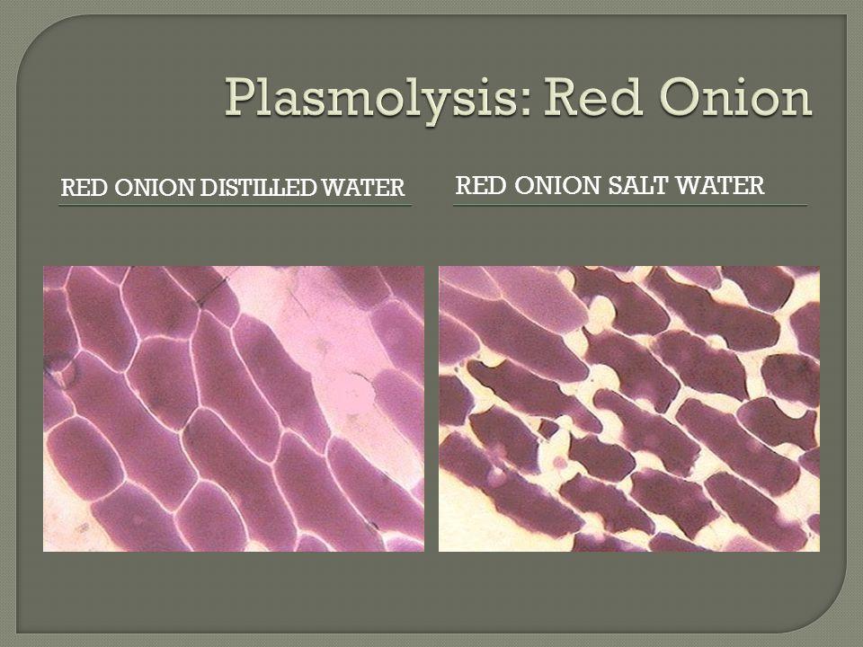 RED ONION DISTILLED WATER RED ONION SALT WATER