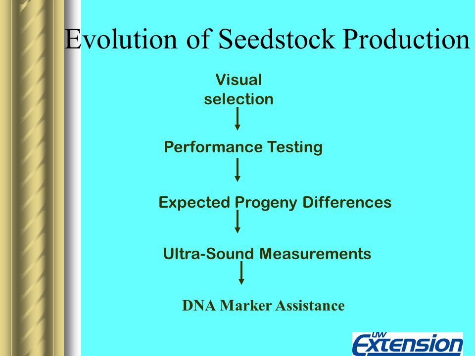 Evolution of Seedstock Production Visual selection Performance Testing Expected Progeny Differences Ultra-Sound Measurements DNA Marker Assistance