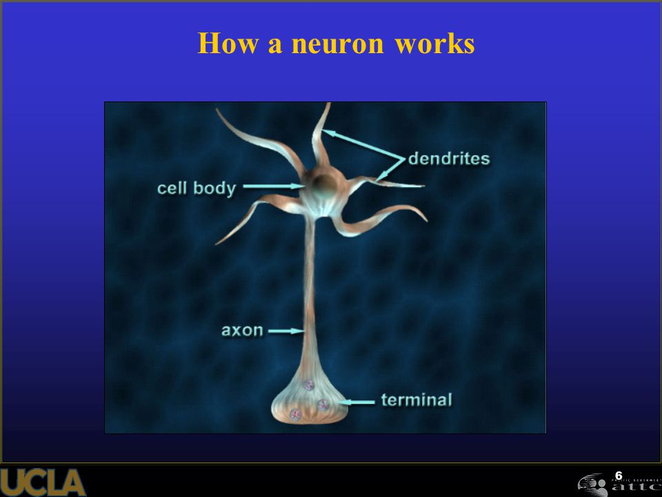 6 How a neuron works
