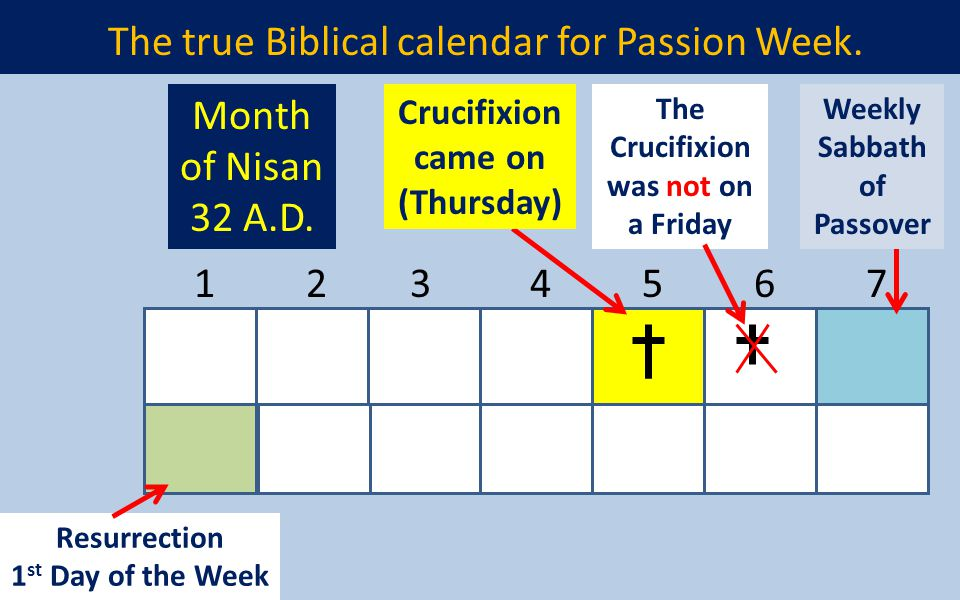 The true Biblical calendar for Passion Week. 1234567 Resurrection 1 st Day of the Week Crucifixion came on (Thursday) Weekly Sabbath of Passover Month