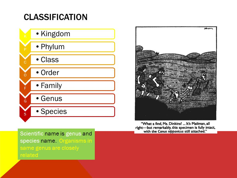 CLASSIFICATION K Kingdom P Phylum C Class O Order F Family G Genus S Species Scientific name is genus and species name. Organisms in same genus are cl