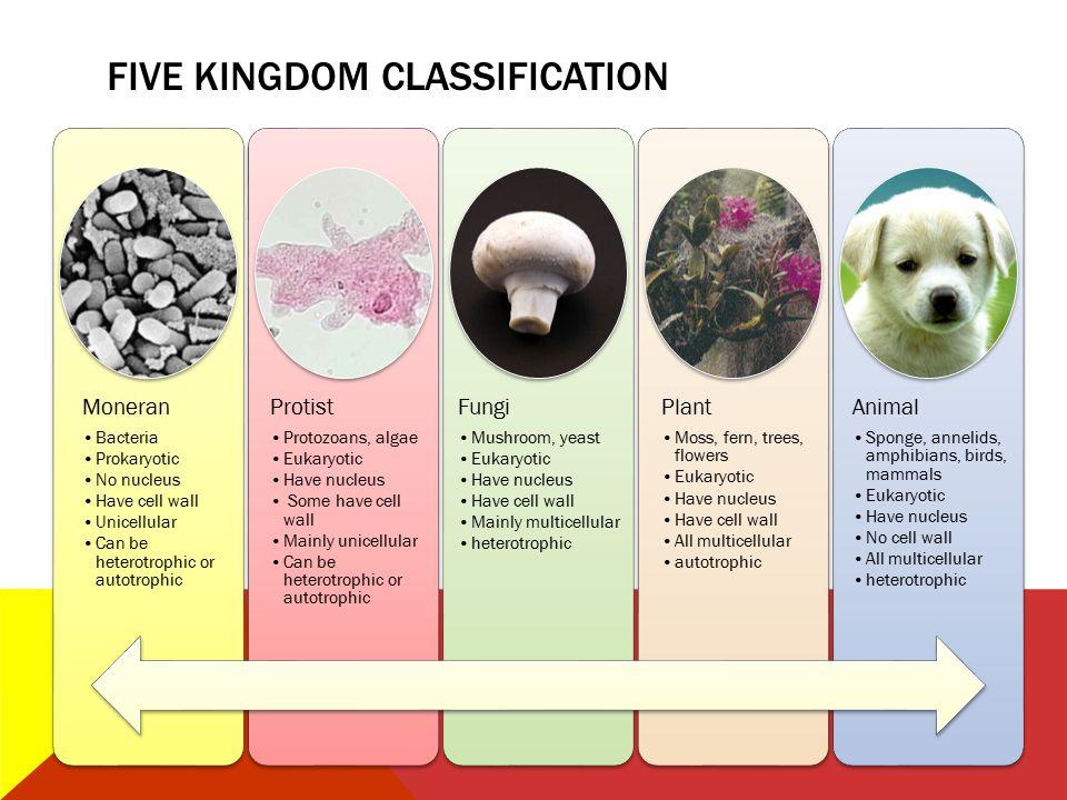 FIVE KINGDOM CLASSIFICATION Moneran Bacteria Prokaryotic No nucleus Have cell wall Unicellular Can be heterotrophic or autotrophic Protist Protozoans,