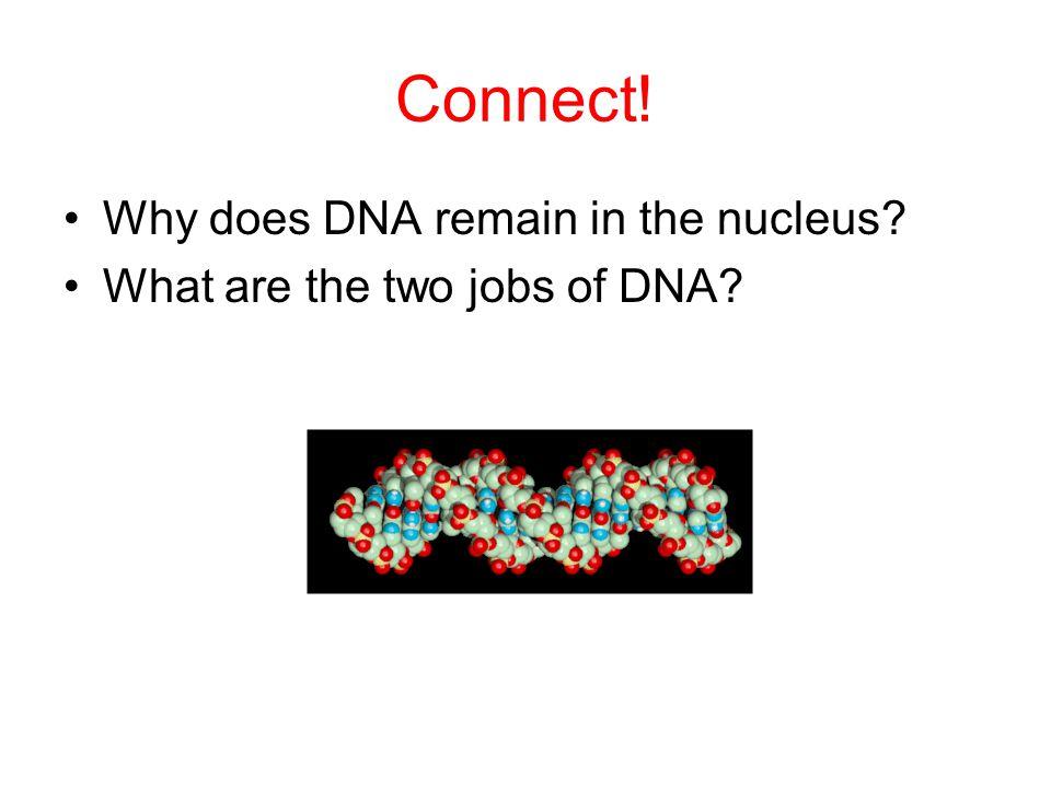 Get it? Dog genes!